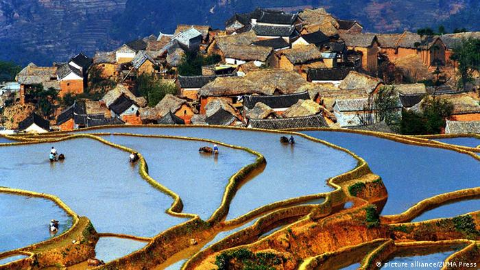 This undated photo shows the Hani people working in the rice terraces in Yuanyang County of Honghe Prefecture, southwest China's Yunnan Province. (picture alliance/ZUMA Press)