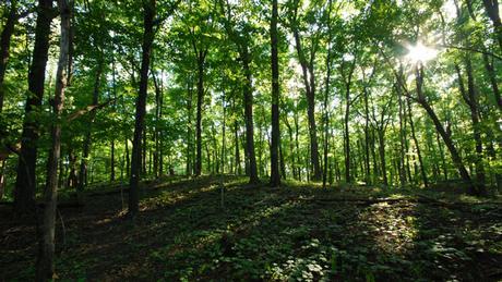 25.06.2013 DW Projekt Zukunft Wald