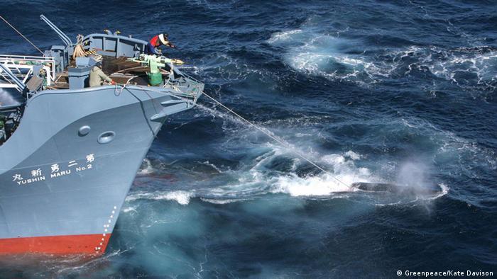 Entscheidung Internationaler Gerichtshof Den Haag Walfang Japan