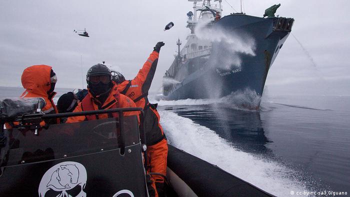 Sea Shepherd crew member Laurens De Groot hurls a bottle of butyric acid (rotten butter) at Japanese harpoon whaling ship, the Yushin Maru No. 1, as the Sea Shepherd helicopter flies overhead. (Photo: Adam Lau/Sea Shepherd Conservation Society)