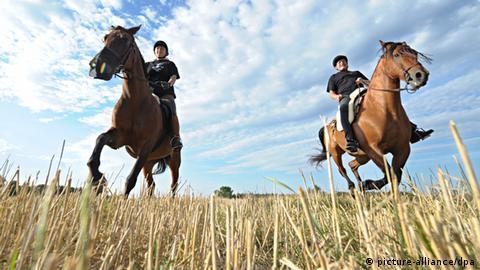 pferde anzahl deutschland