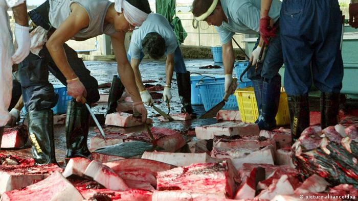 Whale meat being cut into pieces