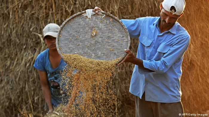An Indian farmer winnows rice at Milanmore village on the outskirts of Siliguri on November 23, 2011. India is the world's second-largest producer of wheat and rice. (Photo: AFP)