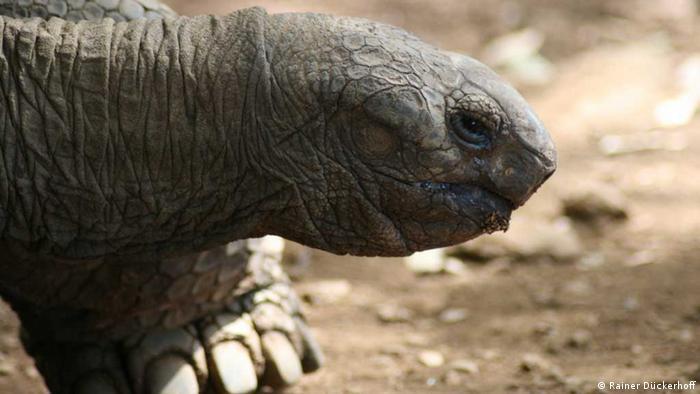 Giant Tortoise on Mauritius (Photo: Rainer Dückerhoff)