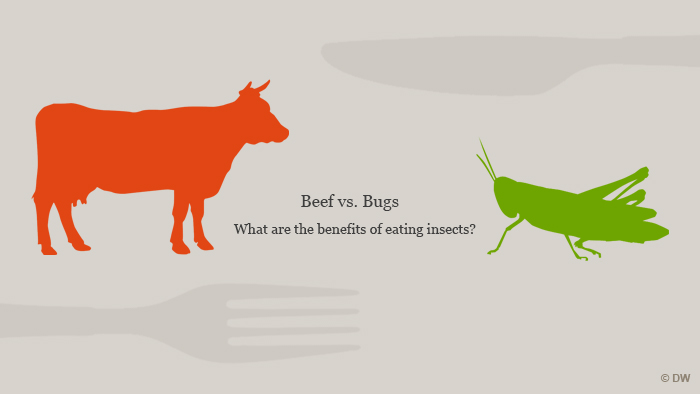 Beef vs. bugs title graphic