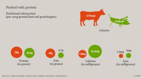 Graphic showing nutritional comparison of beef versus grasshoppers