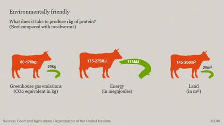 Comparison of carbon emissions, energy and land required to produce 1kg of protein from beef and mealworms