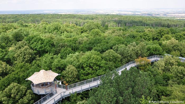 Jalan setapak pohon di Taman Nasional Hainich di Thuringia
