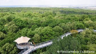 Baumkronenpfad im Nationalpark Hainich, Thüringen (Foto: DW/C. Hoffmann)