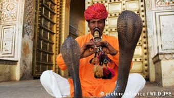 Symbolbild: Ein Schlangenbeschwörer, der mit einer Flöte zwei Kobras tanzen lässt