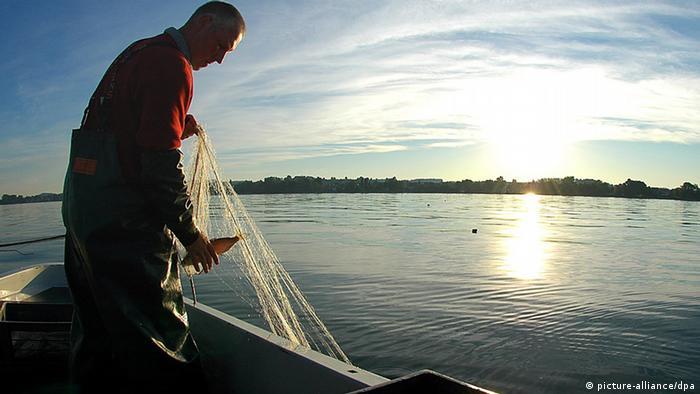 Fischer Jens Schmidt holt bei Sonnenaufgang am 21.06.2005 sein Netz aus dem Bodensee (Bayern) in den Kahn. Foto: dpa