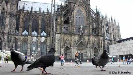 Tauben vor dem Kölner Dom Foto: Michael Hartlepp