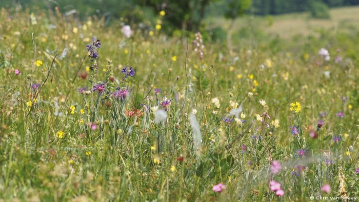 Flores en un campo.
