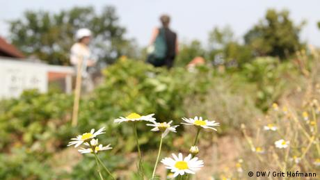 Flowers in a garden with people in the background (Foto: DW/Grit Hofmann)