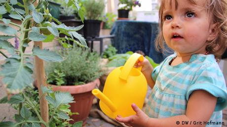 A little girl uses a yellow watering can to water a tomato bush