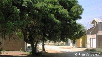 A green neem tree that was planted 14 years ago (Foto: Plan Verde e. V.)
