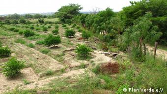 Neem trees border a field (Foto: Plan Verde e.V.)