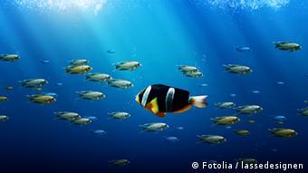 Symbolbilde eines Fisches, der gegen den Strom eines Fischschwarmes schwimmt