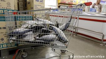 A supermarket trolley filled with fresh fish in a supermarket in Krabi, southern Thailand (Photo: EPA/BARBARA WALTON)