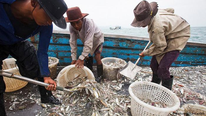 Workers sorting caught fish aboard a bottom trawler fishing vessel in the Gulf of Thailand off the coast of Koh Samui island in Surat Thani