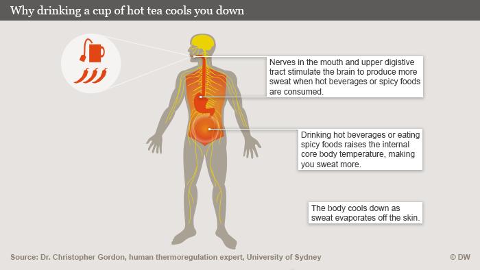 Infografik Warum ein heißer Tee abkühlt Englisch
