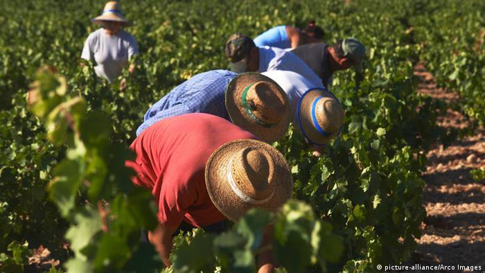 Испанские крестьяне на поле
