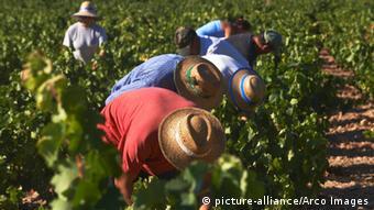 Spanish farmers in a field