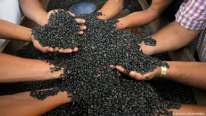 Mãos seguram grãos de feijão preto
