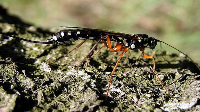 nützliche und schädliche insekten
