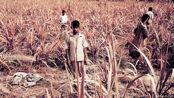 Children working in sugarcane field (Photo: Vikas Kumar)