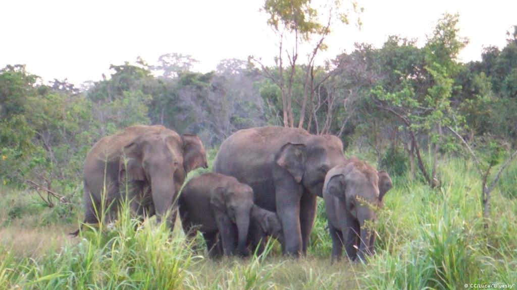 محمية الحيوانات البرية الرائعة