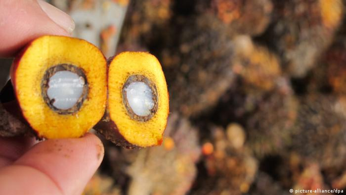Palm fruit being held by a human hand (Photo: dpa/Christiane Oelrich).