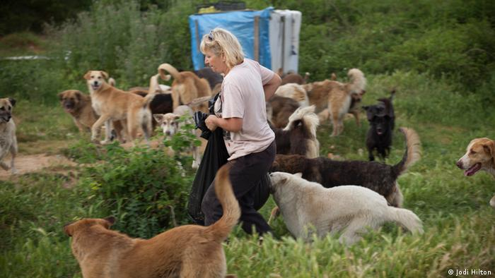 Ayse Sozer, a volunteer, is surrounded by several dozen stray dogs as she delivers food. Istanbul, Turkey. Mai 2013. Photo: Jodi Hill.