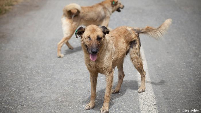 Two stray dogs on the streets of Istanbul, Turkey (Photo: DW / Jodi Hilton)