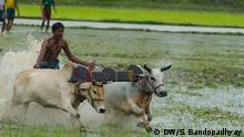 Bildgalerie Cattle Races