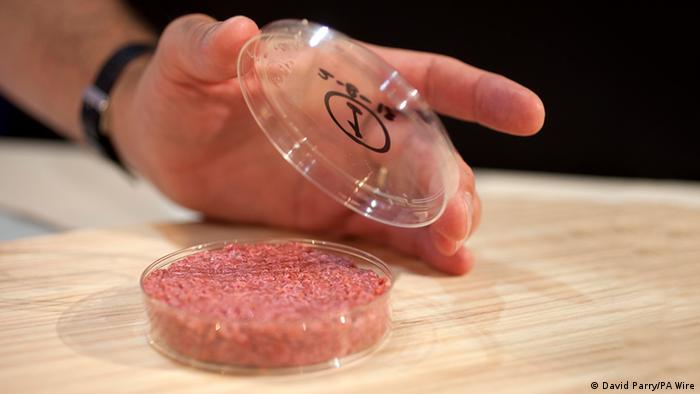 Cultured beef created by painlessly harvesting muscle cells from a living cow