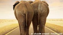 Two elephants on a road,Copyright: JohanSwanepoel