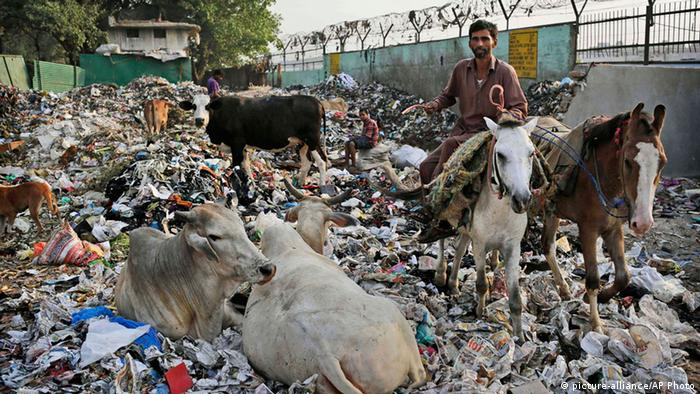CORRECTS DATE - Cows rest in garbage as an Indian man rides his horse away at a dump in New Delhi, India, Wednesday, June 5, 2013. The United Nations' World Environment Day was marked Wednesday. (AP Photo/Kevin Frayer) pixel Schlagworte FREI FÜR SOCIAL MEDIA