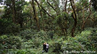 Scientists wander through a thick jungle Photo: Lindsay Mackenzie
