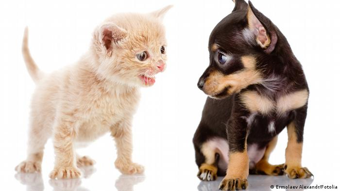 51437151 - kitten abuses a puppy. isolated on white © Ermolaev Alexandr