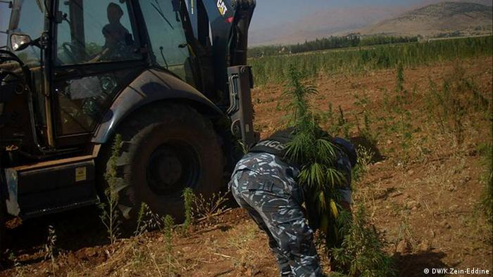 The photos (4) are taken for the security drug control forces while destroying cannabis (hashish) fields and crops in Baalbeck Rights: Khaldoun Zein-Eddine / DW
