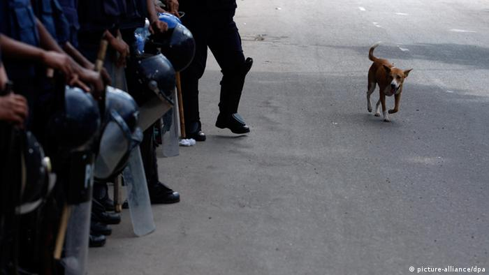 epa03822705 A dog walks past security officials that stand guard in the streets during the 48-hour country wide strike called by Jamaat-e-Islami at Paltan in Dhaka, Bangladesh, 13 August 2013. Jamaat-e-Islami has called the shutdown in a protest against a High Court verdict that declared illegal the party's registration with the Election Commission. EPA/ABIR ABDULLAH +++(c) dpa - Bildfunk+++