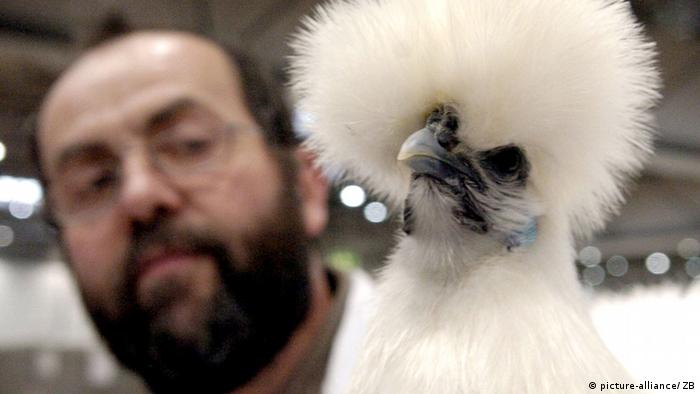 Silky Fowl (Photo: Peter Endig/lsn)