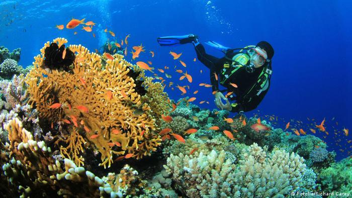 Красоты подводного мира в Красном море привлекают дайверов со всего света