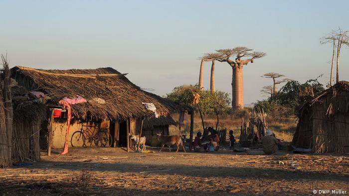 In der Nähe der Stadt Morondava in Madadaskar sitzen Menschen vor ihren Hütten, im Hintergrund Baobab-Bäume (Foto: Friederike Müller/DW)