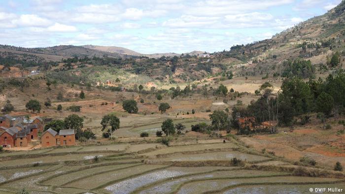 Reisterrassen in den Hochplateaus von Madagaskar (Foto: Friederike Müller/DW)