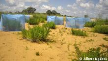 Die ReviTec-Fläche in Kamerun