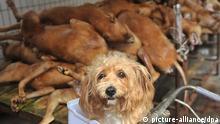 Handel und Verzehr von Hundefleisch in China
