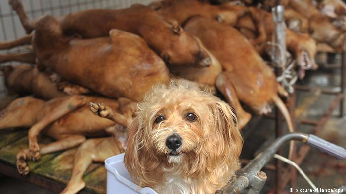 Handel und Verzehr von Hundefleisch in China (picture-alliance/dpa)