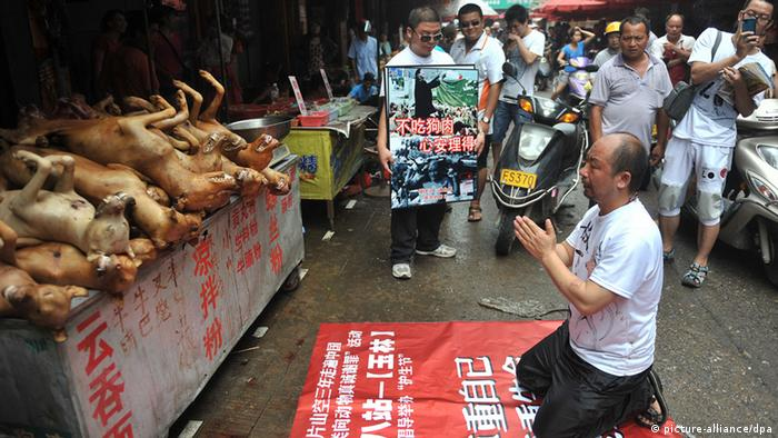 Chinese animal protection activist nicknamed Pian Shan Kong kneels down in front of dogs killed and to be eaten to show apology during a campaign to advocate stopping eating dog meat at a free market in Yulin city, south Chinas Guangxi Zhuang Autonomous Region, 21 June 2012.